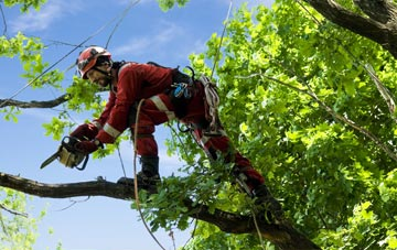 find trusted rated Shankill tree surgeons in Belfast