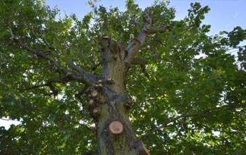 what is Shankill tree surgery?
